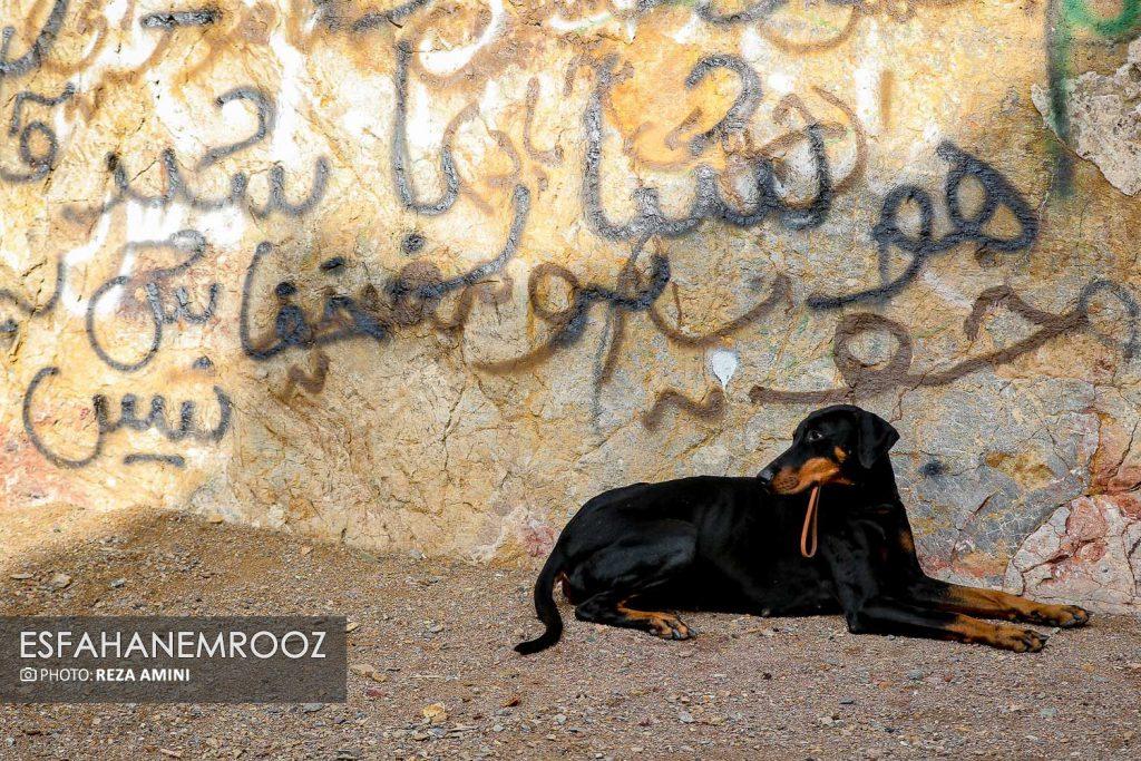 تمرین سگ های زنده یاب ایرانی و آلمانی در محدوده معدن سورمه نجف آباد راه اندازی معدن سورمه نجف آباد توسط ۲برادر+تصاویر راه اندازی معدن سورمه نجف آباد توسط ۲برادر+تصاویر                                                                     25 1024x683