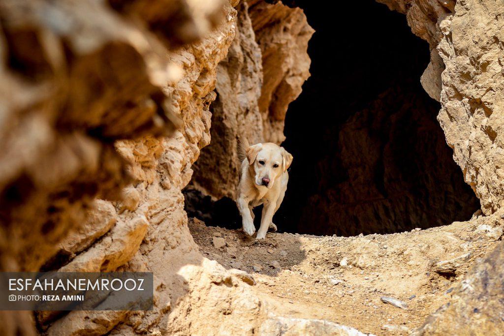 تمرین سگ های زنده یاب ایرانی و آلمانی در محدوده معدن سورمه نجف آباد راه اندازی معدن سورمه نجف آباد توسط ۲برادر+تصاویر راه اندازی معدن سورمه نجف آباد توسط ۲برادر+تصاویر                                                                     31 1024x683