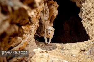 تمرین سگ های زنده یاب ایرانی و آلمانی در محدوده معدن سورمه نجف آباد مانور سگ های زنده یاب آلمانی در نجف آباد+تصاویر مانور سگ های زنده یاب آلمانی در نجف آباد+تصاویر                                                                     31 300x200