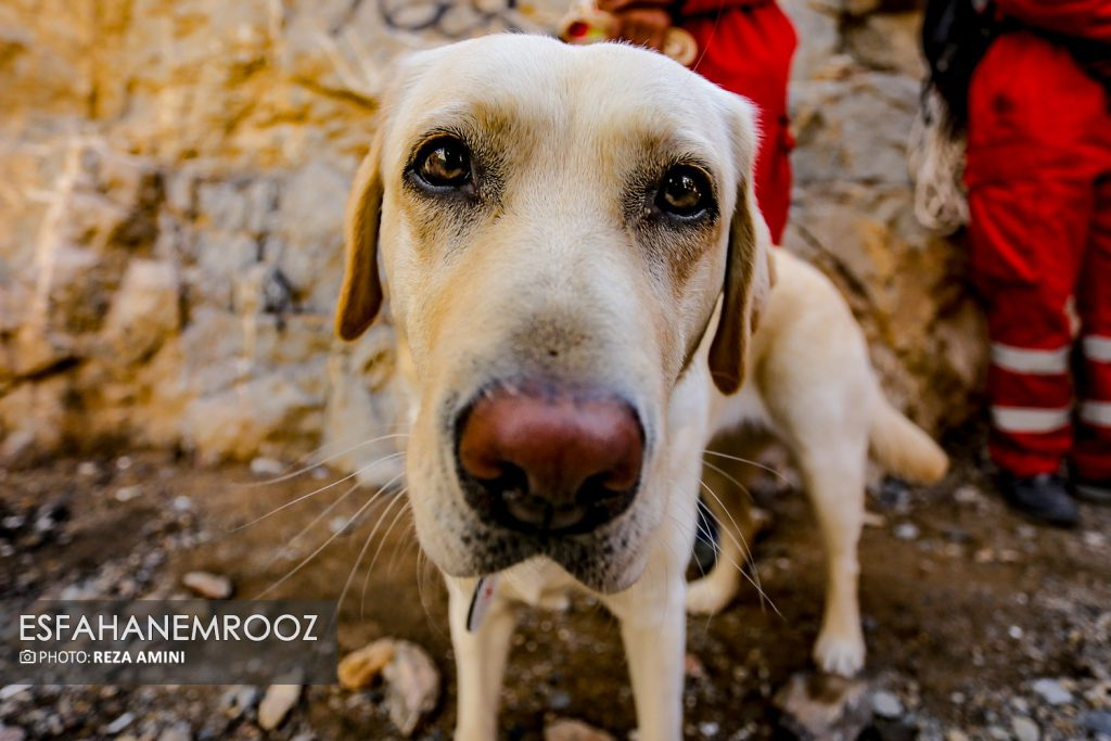 تمرین سگ های زنده یاب ایرانی و آلمانی در محدوده معدن سورمه نجف آباد راه اندازی معدن سورمه نجف آباد توسط ۲برادر+تصاویر راه اندازی معدن سورمه نجف آباد توسط ۲برادر+تصاویر                                                                     33 1024x683