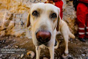 تمرین سگ های زنده یاب ایرانی و آلمانی در محدوده معدن سورمه نجف آباد مانور سگ های زنده یاب آلمانی در نجف آباد+تصاویر مانور سگ های زنده یاب آلمانی در نجف آباد+تصاویر                                                                     33 300x200