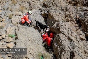 تمرین سگ های زنده یاب ایرانی و آلمانی در محدوده معدن سورمه نجف آباد مانور سگ های زنده یاب آلمانی در نجف آباد+تصاویر مانور سگ های زنده یاب آلمانی در نجف آباد+تصاویر                                                                     7 300x200