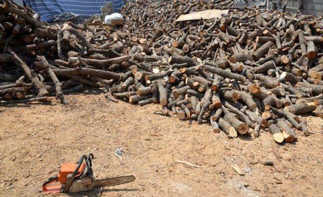 کشف ۴تن چوب بلوط قاچاق در نجف آباد