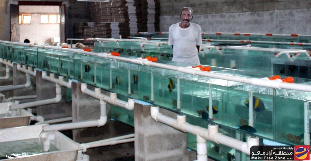 صادرات ماهی زینتی از نجف آباد