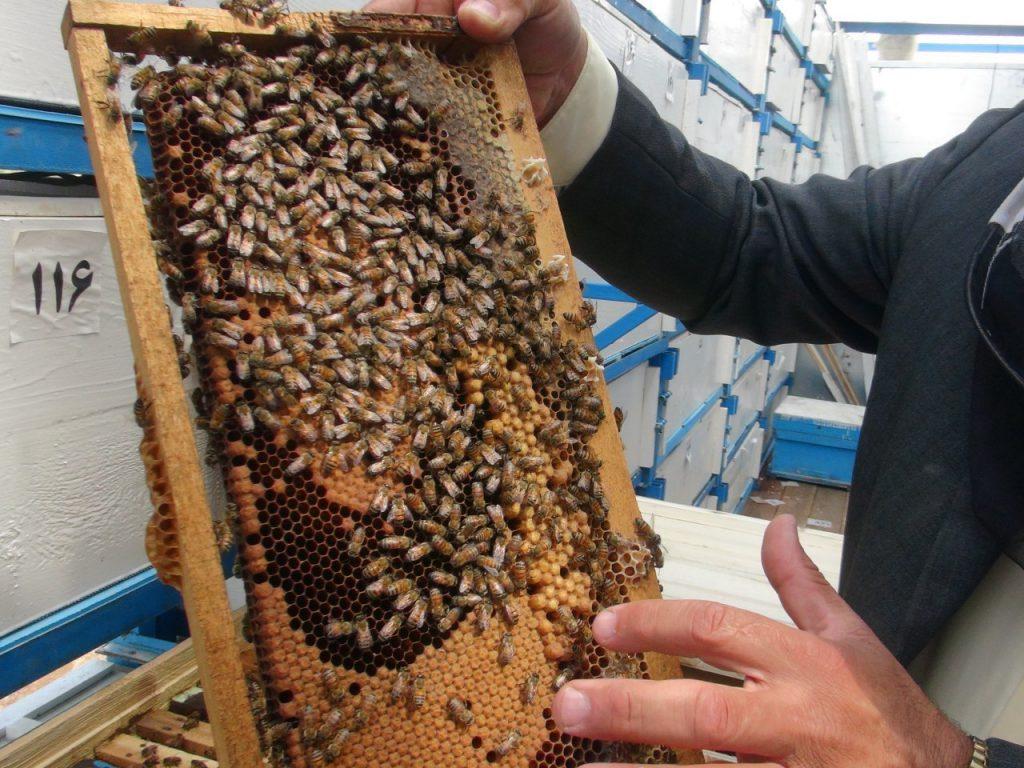 ابتکارات ابتکارات جدید در صنعت زنبورداری+ تصویر 1962573 417 1024x768