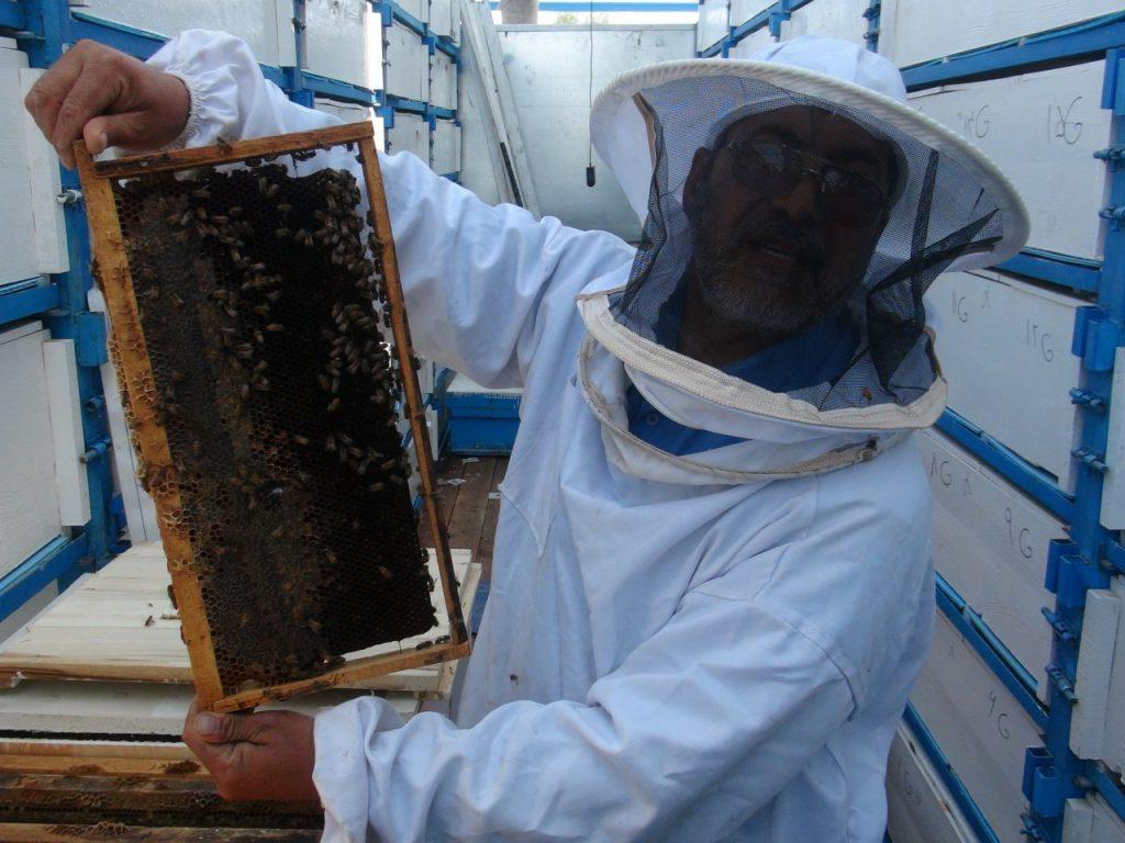 ابتکارات ابتکارات جدید در صنعت زنبورداری+ تصویر 1962574 812 1024x768