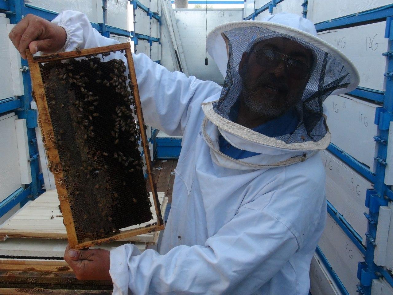 فعالیت ۱۶۰۰ زنبوردار در نجف آباد فعالیت ۱۶۰۰ زنبوردار در نجف آباد فعالیت ۱۶۰۰ زنبوردار در نجف آباد 1962574 812