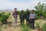 تولید انار و بادام ارگانیک در نجف آباد+ تصاویر تولید تولید انار و بادام ارگانیک در نجف آباد+ تصاویر                                    155x105