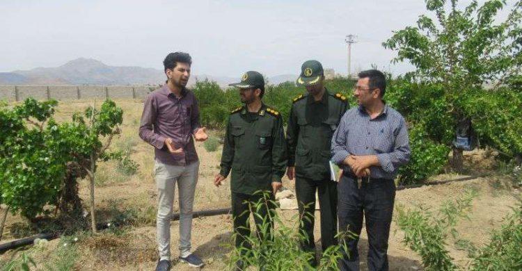 تولید انار و بادام ارگانیک در نجف آباد+ تصاویر تولید تولید انار و بادام ارگانیک در نجف آباد+ تصاویر                                    750x390