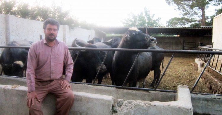 پرورش گاومیش در نجف آباد + تصویر و فیلم پرورش پرورش گاومیش در نجف آباد + تصویر و فیلم                         2 750x390