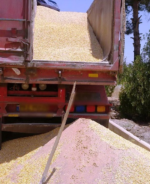 کشف ۱۳۰ تن ذرت فاسد در نجف آباد