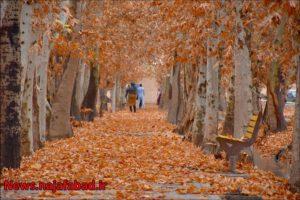 پاییز نجف آباد پاییز در بوستان زندگی نجف آباد + تصاویر پاییز در بوستان زندگی نجف آباد + تصاویر 1575798381 A6iG1 300x200