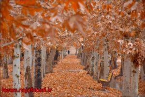 پاییز نجف آباد پاییز در بوستان زندگی نجف آباد + تصاویر پاییز در بوستان زندگی نجف آباد + تصاویر 1575798387 F7kZ0 300x200