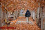 پاییز در بوستان زندگی نجف آباد + تصاویر پاییز در بوستان زندگی نجف آباد + تصاویر پاییز در بوستان زندگی نجف آباد + تصاویر 1575798403 A4aO5 155x105