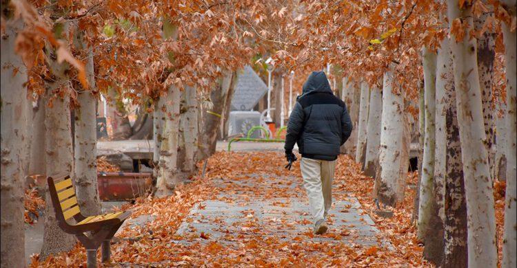 پاییز در بوستان زندگی نجف آباد + تصاویر پاییز در بوستان زندگی نجف آباد + تصاویر پاییز در بوستان زندگی نجف آباد + تصاویر 1575798403 A4aO5 750x390