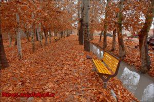 پاییز نجف آباد پاییز در بوستان زندگی نجف آباد + تصاویر پاییز در بوستان زندگی نجف آباد + تصاویر 1575798409 H4cI2 300x200