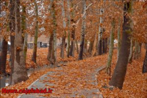 پاییز پاییز در بوستان زندگی نجف آباد + تصاویر پاییز در بوستان زندگی نجف آباد + تصاویر 1575798414 R4bC0 300x200