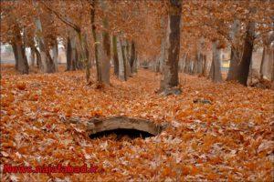 بوستان زندگی نجف آباد پاییز در بوستان زندگی نجف آباد + تصاویر پاییز در بوستان زندگی نجف آباد + تصاویر 1575798420 G3fC9 300x200