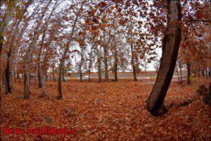 پاییز نجف آباد پاییز در بوستان زندگی نجف آباد + تصاویر پاییز در بوستان زندگی نجف آباد + تصاویر 1575798425 N8uX9 300x200
