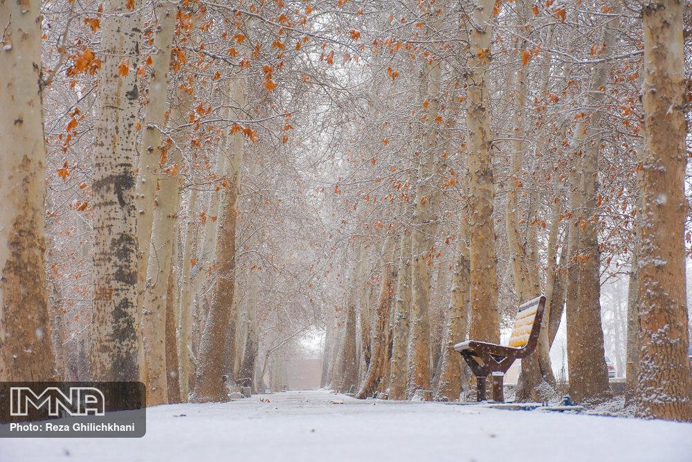 بارش برف در نجف آباد برف نوبرانه در نجف آباد+تصاویر برف نوبرانه در نجف آباد+تصاویر                                      12