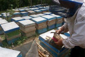 زنبورداری صادرات21 تن عسل نجف آباد به خلیج فارس صادرات21 تن عسل نجف آباد به خلیج فارس                    300x200