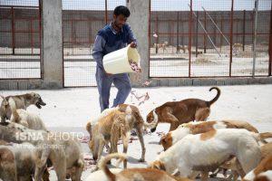 سگ ظلم یک عمامه پوش به حیثیت نجف آباد+فیلم ظلم یک عمامه پوش به حیثیت نجف آباد+فیلم      300x200