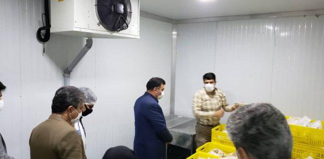 افتتاح مجتمع بسته بندگی گوشت در نجف آباد با هزینه ۲میلیاردی افتتاح مجتمع بسته بندگی گوشت در نجف آباد با هزینه ۲میلیاردی افتتاح مجتمع بسته بندگی گوشت در نجف آباد با هزینه ۲میلیاردی                          650x320