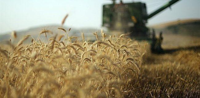 تحویل ۱۱۵۰ تن گندم به مرکز خرید نجف آباد تحویل ۱۱۵۰ تن گندم به مرکز خرید نجف آباد تحویل ۱۱۵۰ تن گندم به مرکز خرید نجف آباد                   650x320
