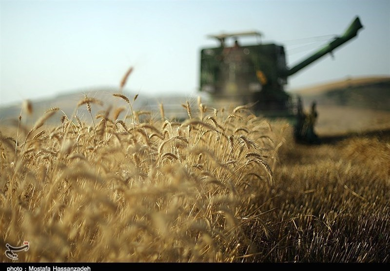 خرید هزار تن گندم در نجف آباد خرید هزار تن گندم در نجف آباد خرید هزار تن گندم در نجف آباد