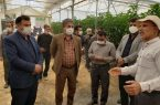 افتتاح گلخانه در قلعه سفید+تصاویر