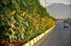 ۹هزار متر مربع آفتابگردان در بلوار نجف آباد+تصاویر ۹هزار متر مربع آفتابگردان در بلوار نجف آباد+تصاویر ۹هزار متر مربع آفتابگردان در بلوار نجف آباد+تصاویر 1597225358 C1yL7 145x95