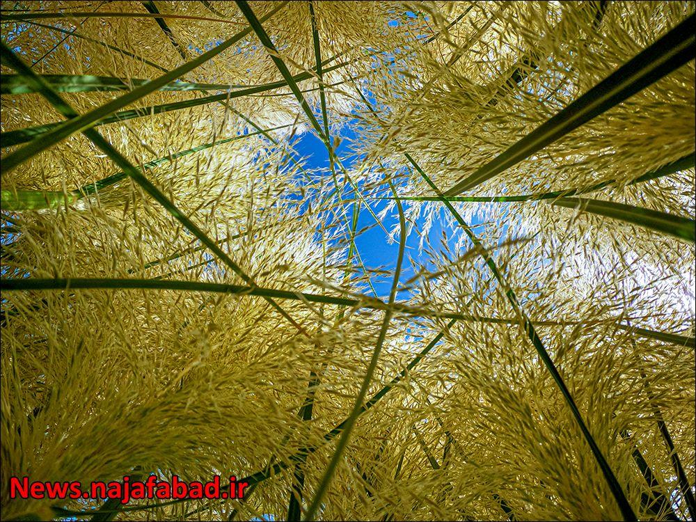 چهار باغ نجف آباد زیبایی های چهار باغ نجف آباد+تصاویر زیبایی های چهار باغ نجف آباد+تصاویر 1597723276 V4sW7