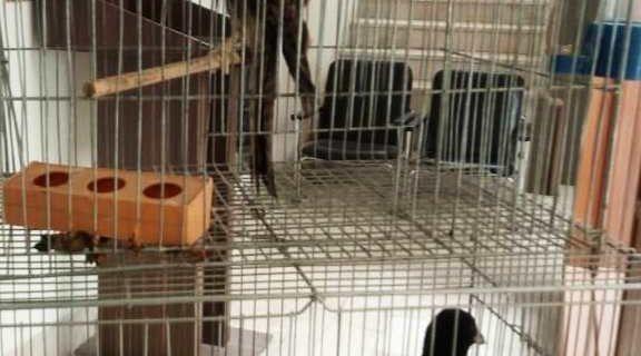 تحویل دو پرنده به محیط زیست نجف آباد+تصویر تحویل دو پرنده به محیط زیست نجف آباد+تصویر تحویل دو پرنده به محیط زیست نجف آباد+تصویر                                                                   576x320
