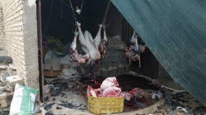 کشتارگاه غیر مجاز شتر مرغ در نجف آباد مهرو موم کشتارگاه غیر مجازشتر مرغ در نجف آباد مهرو موم کشتارگاه غیر مجازشتر مرغ در نجف آباد                                300x168