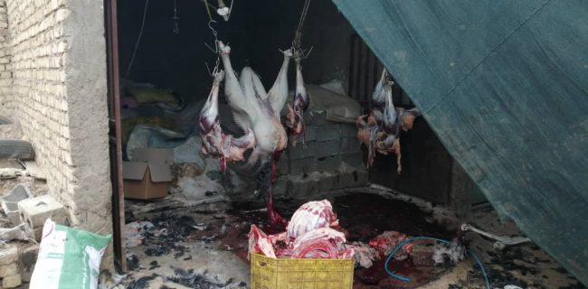 مهرو موم کشتارگاه غیر مجازشتر مرغ در نجف آباد مهرو موم کشتارگاه غیر مجازشتر مرغ در نجف آباد مهرو موم کشتارگاه غیر مجازشتر مرغ در نجف آباد                                650x320