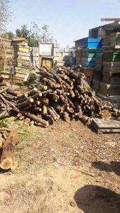 کشف چوب بلوط قاچاق در نجف آباد  کشف ۷ تن چوب بلوط قاچاق در نجف آباد+تصاویر کشف ۷ تن چوب بلوط قاچاق در نجف آباد+تصاویر                                                        1 169x300