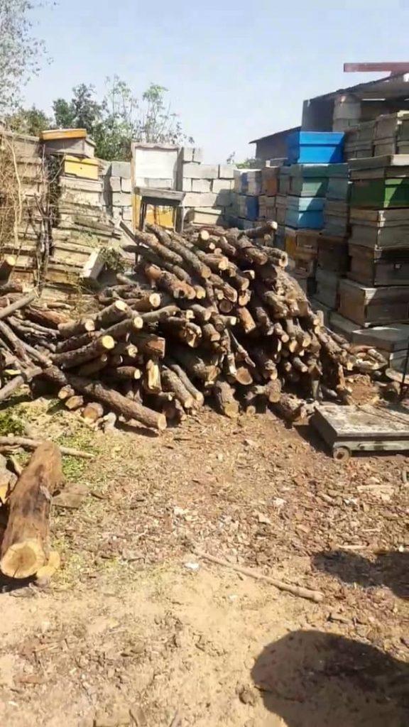 کشف چوب بلوط قاچاق در نجف آباد کشف ۷ تن چوب بلوط قاچاق در نجف آباد+تصاویر کشف ۷ تن چوب بلوط قاچاق در نجف آباد+تصاویر                                                        1 576x1024