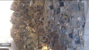 تولید قارچ گانودرما در نجف آباد تولید قارچ طب سنتی در نجف آباد+تصاویر و فیلم تولید قارچ طب سنتی در نجف آباد+تصاویر و فیلم 5536306 870 300x169