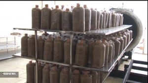 تولید قارچ گانودرما در نجف آباد تولید قارچ طب سنتی در نجف آباد+تصاویر و فیلم تولید قارچ طب سنتی در نجف آباد+تصاویر و فیلم 5536308 336 300x169