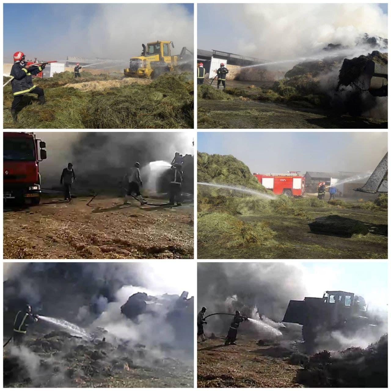 آتش سوزی گاوداری در گلدشت+تصویر آتش سوزی گاوداری در گلدشت+تصویر آتش سوزی گاوداری در گلدشت+تصویر